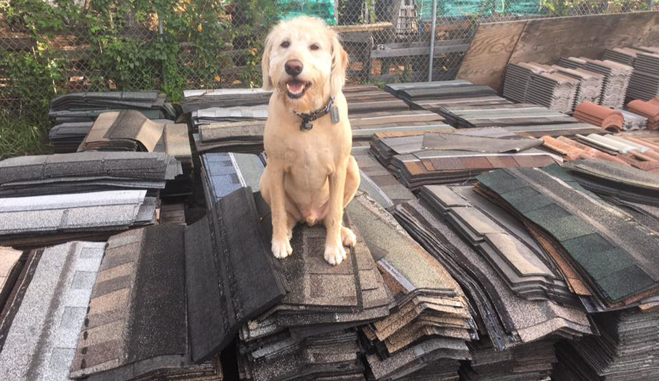 Westfall pooch sitting on stacks of shingles